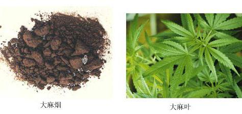 大麻烟-大麻叶.jpg